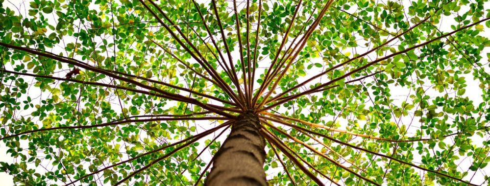 Bien intégrer l'ESG à sa sélection de fonds reste un défi