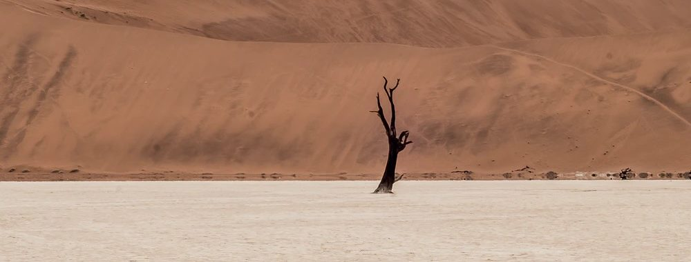 Investissement et urgence climatique