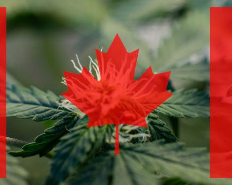 Les producteurs autorisés canadiens rattrapent leur retard. S'agit-il de la fin de la hausse?