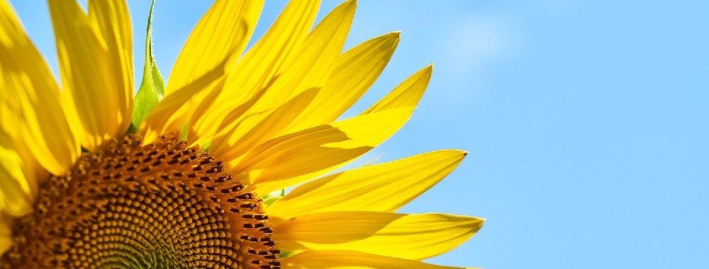 Les filtres ESG permettent de construire des portefeuilles plus robustes